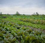 landwirtschaft_reinhard