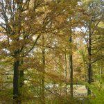 Erberswalde Herbstwald